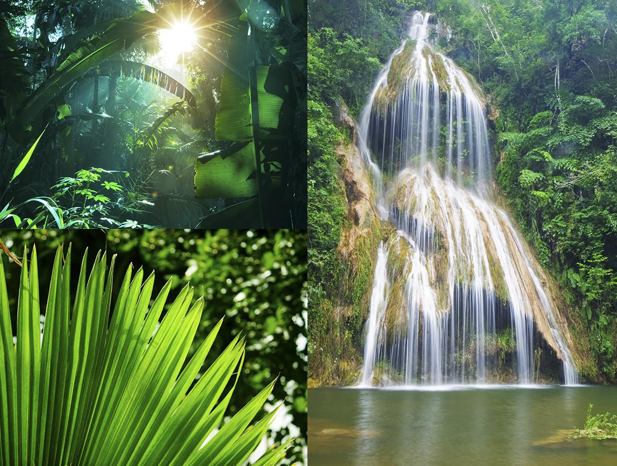 Djungelboken The jungle book Midbec tapet wallpaper inspiration vattenfall