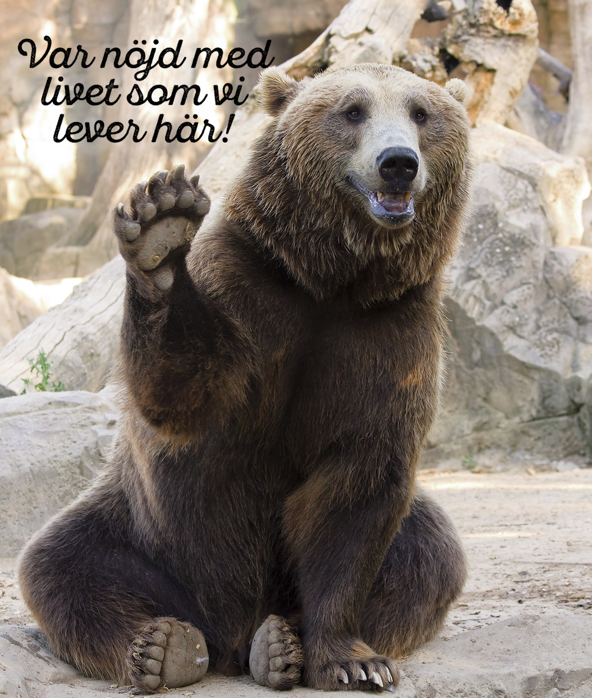 Djungelboken The jungle book Midbec tapet wallpaper inspiration djur bjorn baloo bear