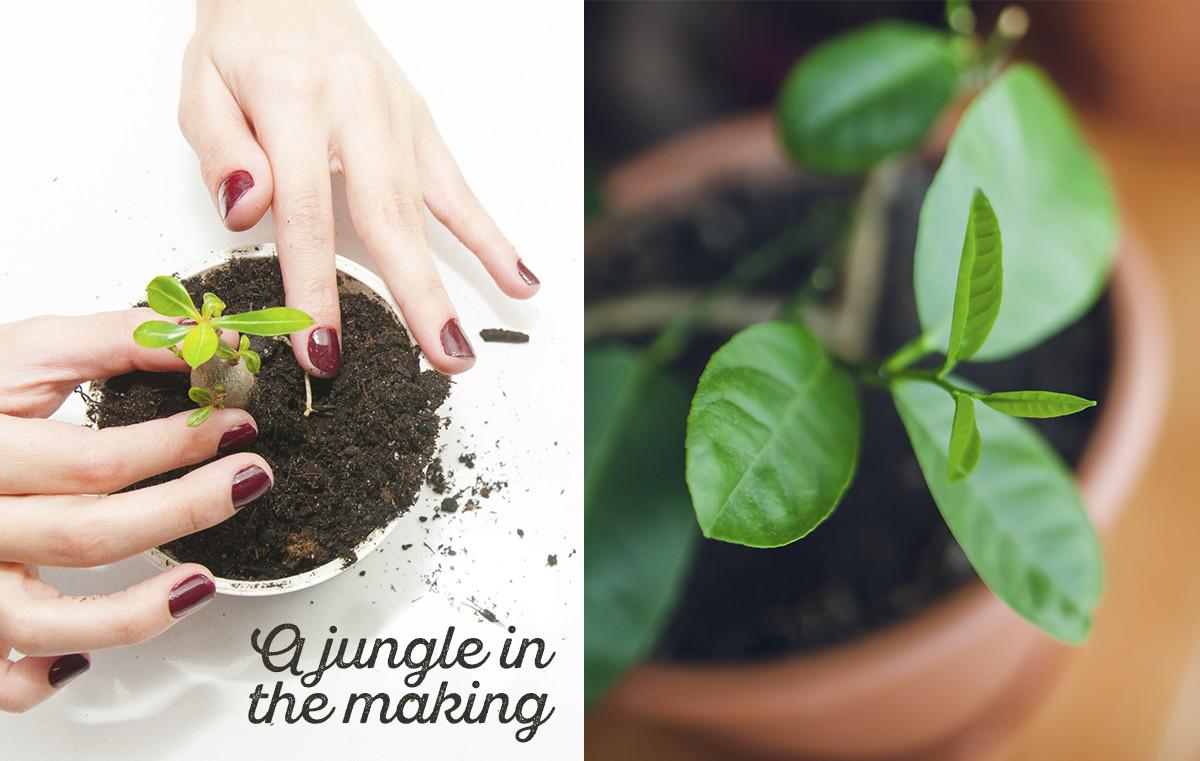 Djungelboken The jungle book Midbec tapet wallpaper inspiration odla garden