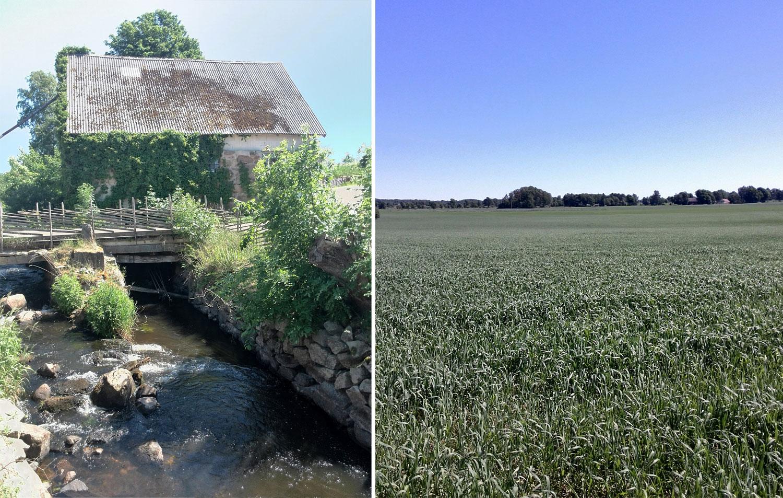 Midbecs_sommarpärlor_strömma_farmlodge_natur