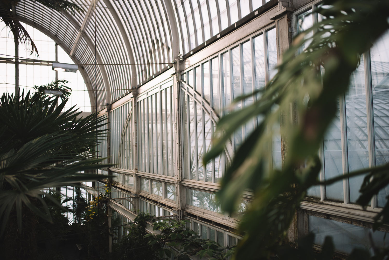 Tapetfrukost-Palmhuset-palmer-Midbec-Tapeter