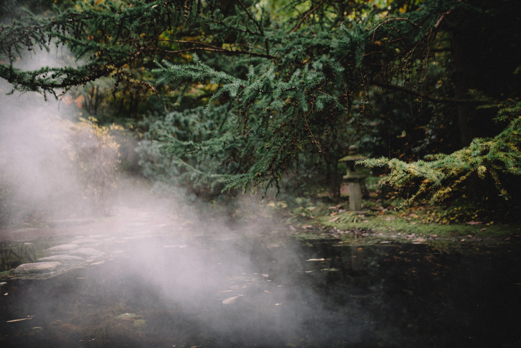 bilderna i lyckebo skog midbec tapeter