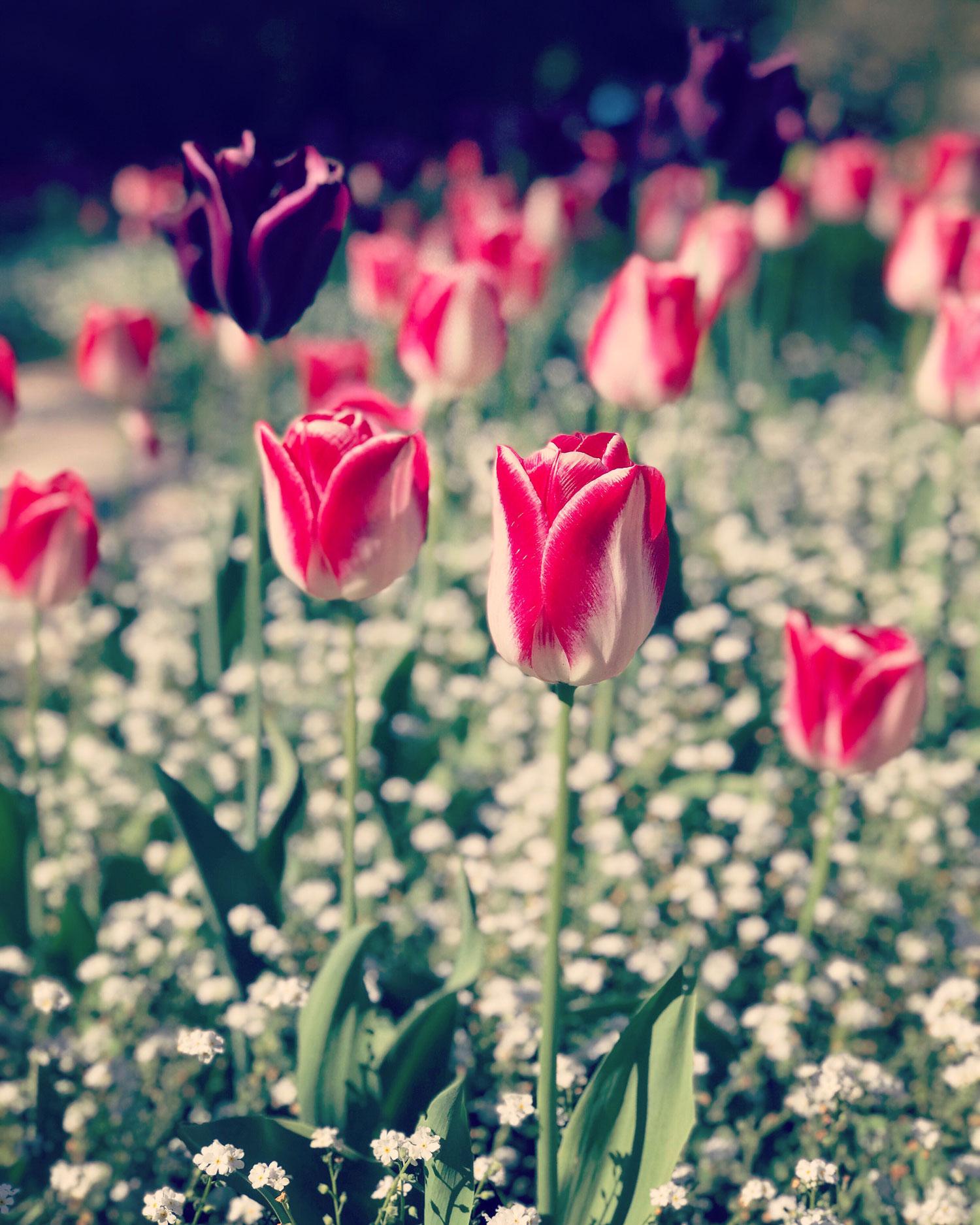 botaniska-trädgården-visby-gotland-midbec-tapeter