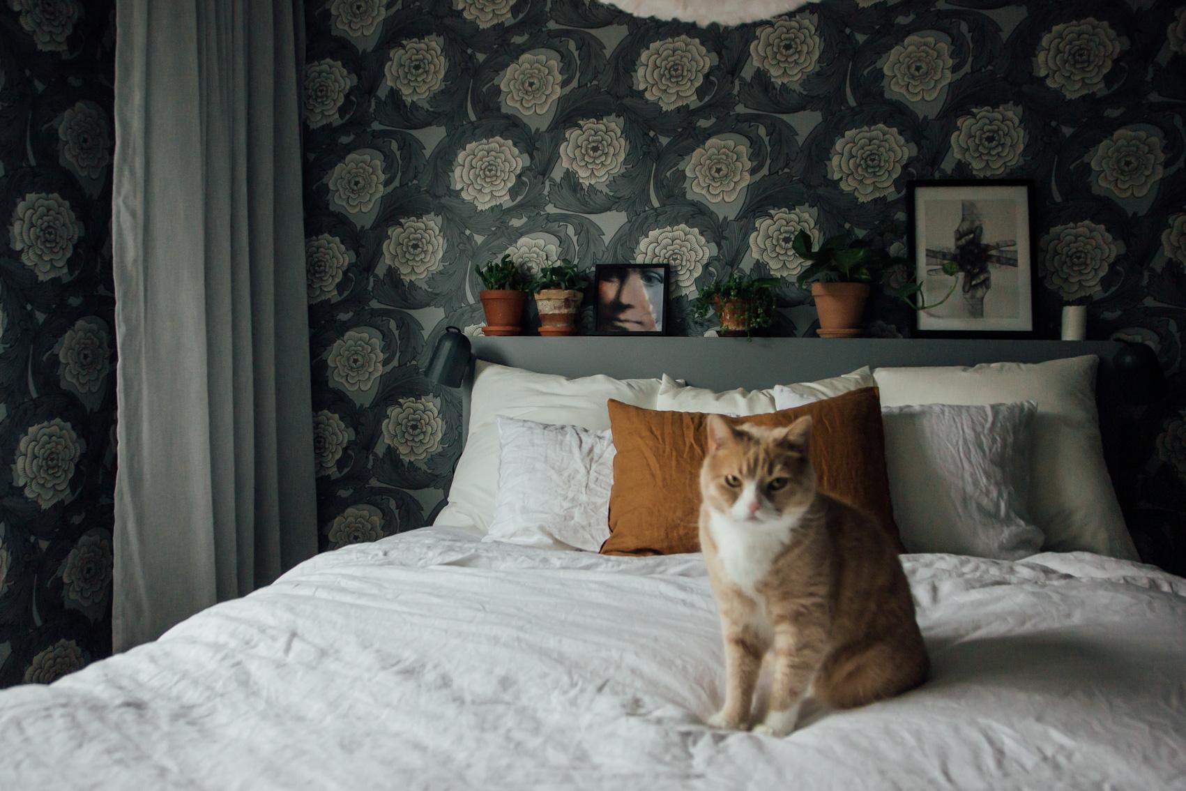 hemma hos trea katt sovrum midbec tapeter