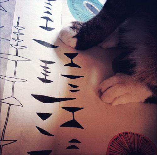 Miss Print -Katt