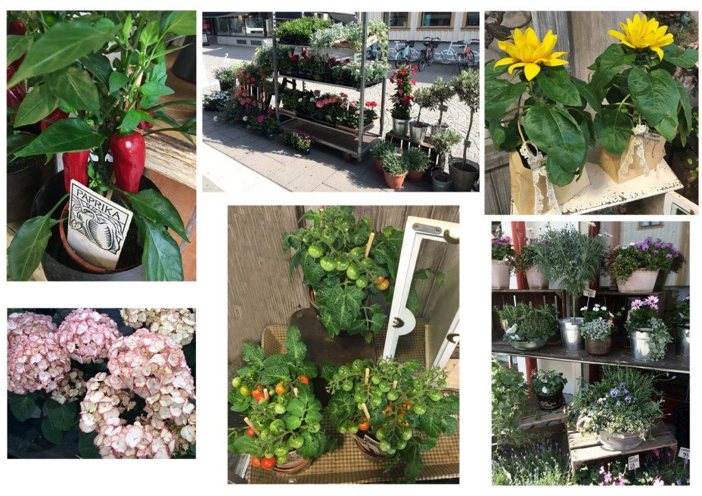 planterings-tips
