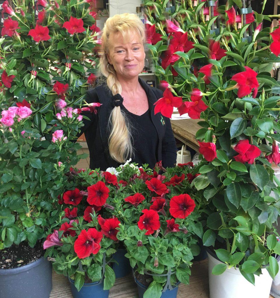 tips-om-blommor-klocktornetsblommor