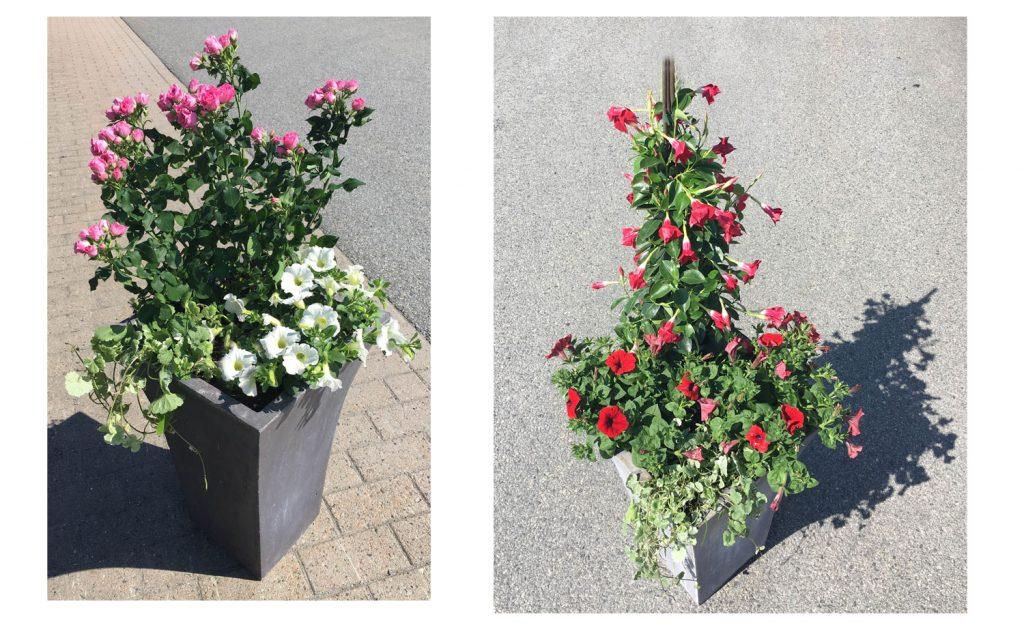 vår-plantering-uteblommor-sommar